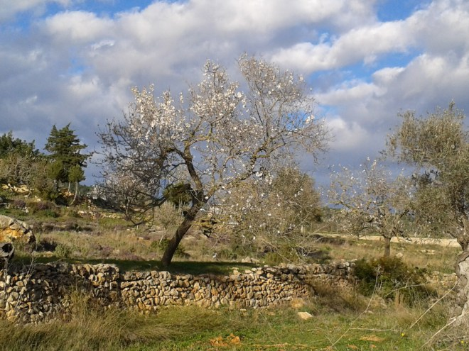 Sant Mateu valley, Ibiza